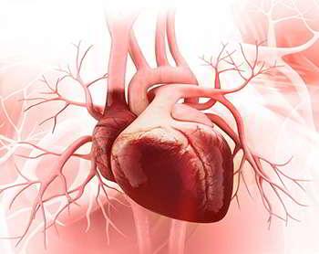 Дианулин укрепляет сосуды и сердце