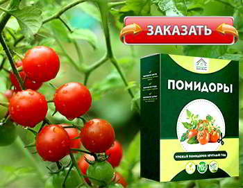 Мини ферма помидоры купить