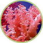 литотамниум калкалерум содержится в составе slim biotic