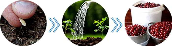 Инструкция по выращиванию мини деревьев Экодар