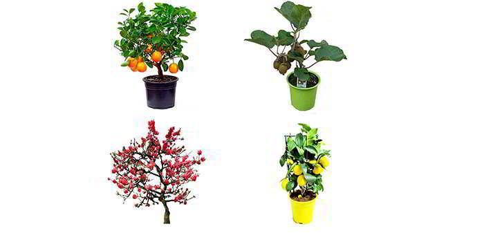 Разновидности мини деревьев Экодар