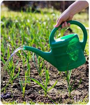 Поливает огород средством garden pest