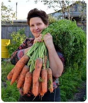 Урожай, урожай выращенный с удобрением Агрофорте
