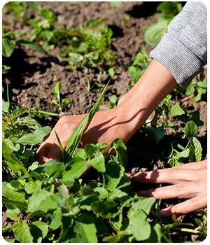 Огород не обработанный Биограундом