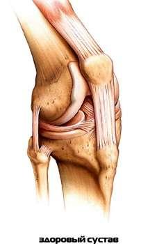 Здоровый сустав после применения Артонина для суставов.