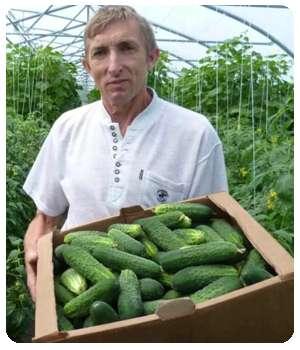 Благодаря средству Agroup вырос хороший урожай.